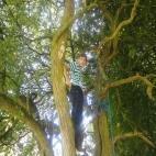 Tree Climb Play Rangers